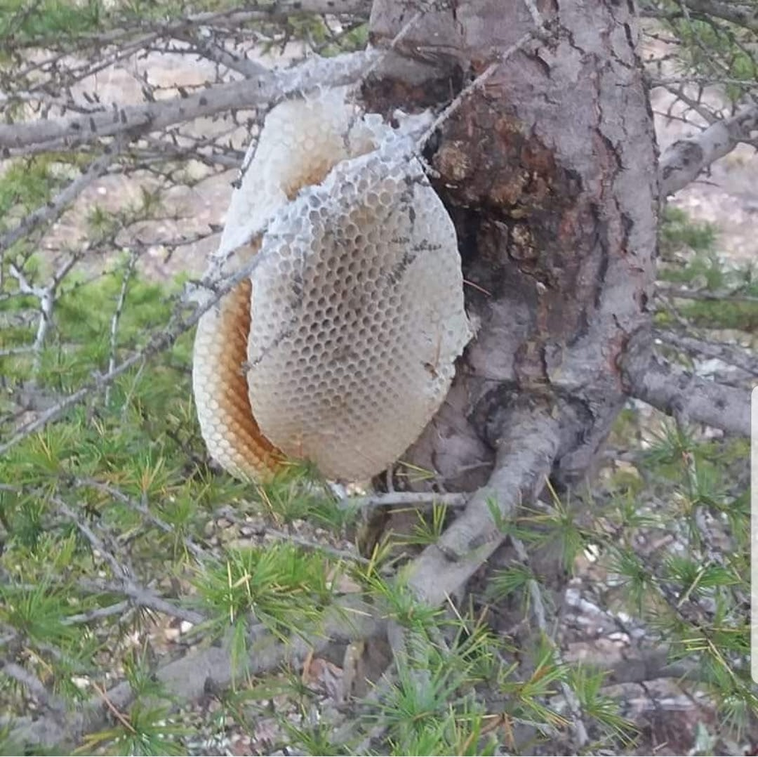 عسل درختی ۲ کیلوگرم