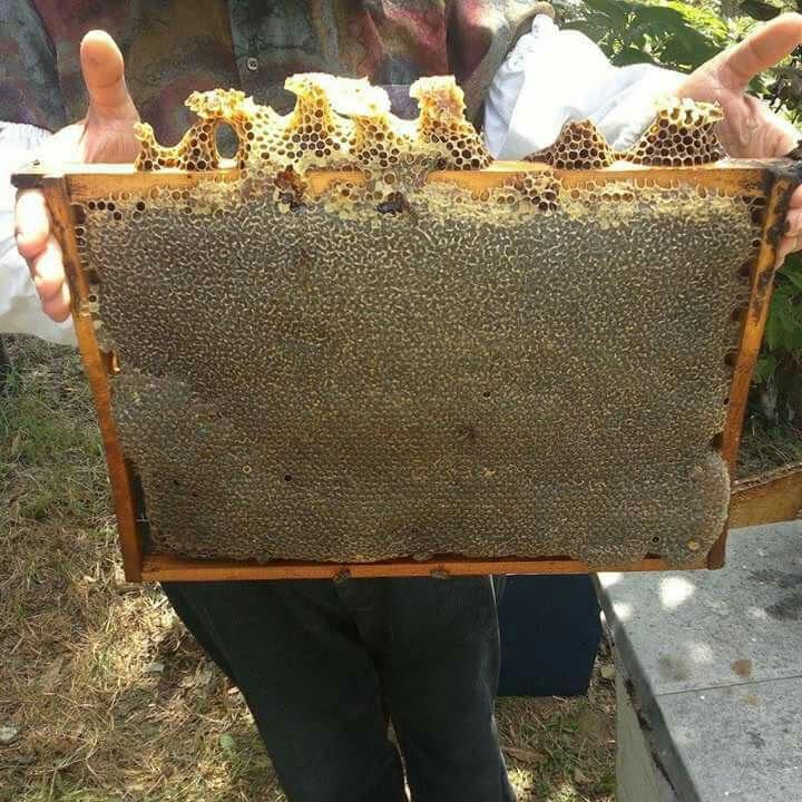 عسل طبیعی گون 4000 گرم