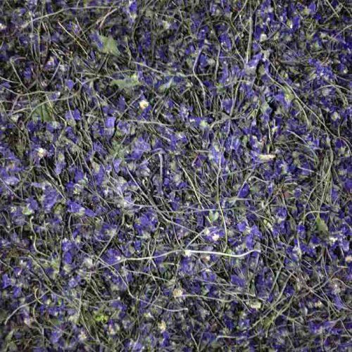 گل بنفشه خشک ۲۰ گرم